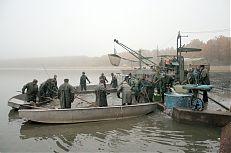 Loviště rybníka Dvořiště se připravuje k odlovu.