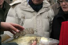 Jan Fischer si prohlédl i jednotlivé ryby včetně dravého candáta.