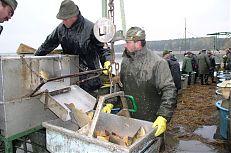 Vážení vylovených ryb na rybníce Dvořiště
