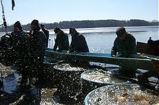 Rybáři na třidičce třídí ryby podle druhu.