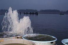 Snímek pořízených při výlovu rybníka Kaňov.