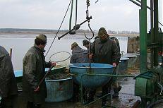 Nakládání ryby a vážení ryby na váze, tzv. mušli.