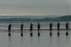 Práce rybářů při výlovu. Na snímku jsou tzv. pěšáci.