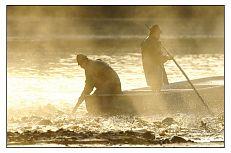 Záběr z výlovu na Třeboňsku. Na snímku tzv. ryba vaří před sítí.