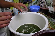 Oplozování jiker amura bílého v rybí líhni.