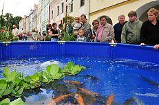 Výstava sladkovodních a okrasných ryb.