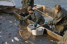 Vybírání choulostivé ryby