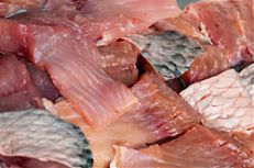 Naporcováné kapří maso.